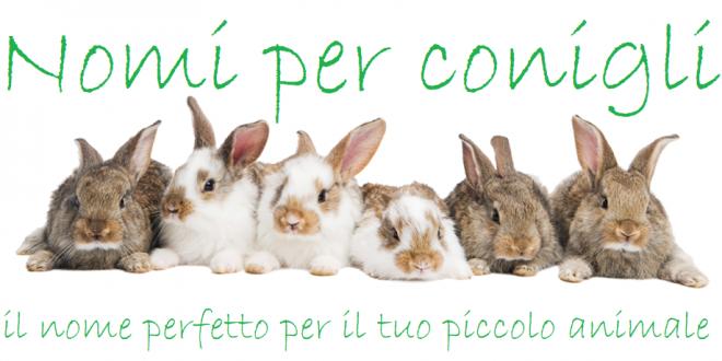 Nomi per conigli lista dei nomi di conigli per maschi e for Nomi per cani maschi piccoli