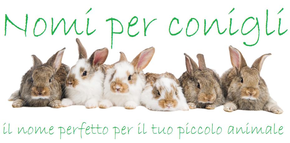 Nomi conigli piu comuni frequenti famosi maschili femminili.