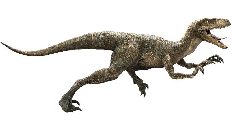 Nomi dinosauri Velociraptor