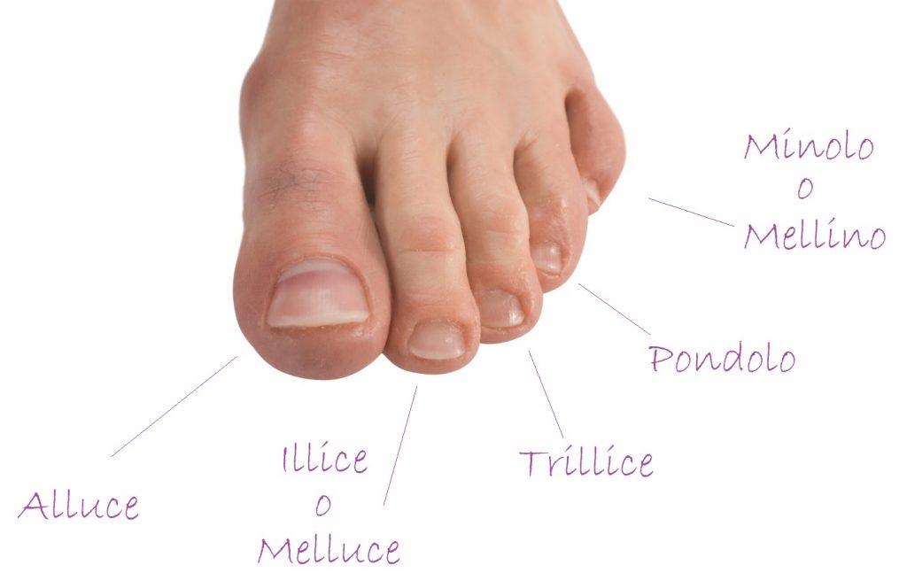 Nomi dita piedi scopri quali sono