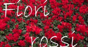 Nomi fiori rossi