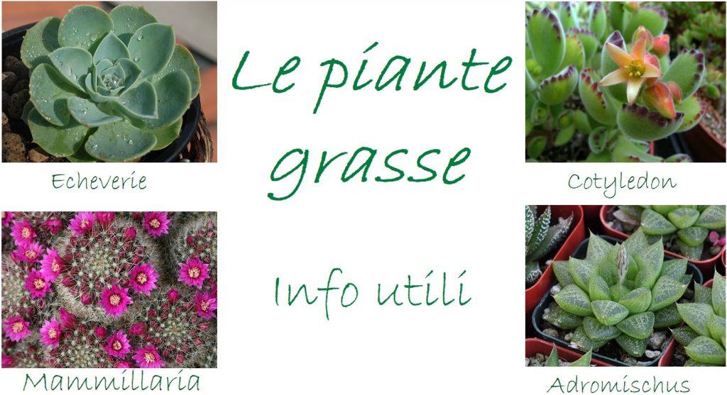 Nomi piante grasse