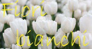 Nomi fiori bianchi