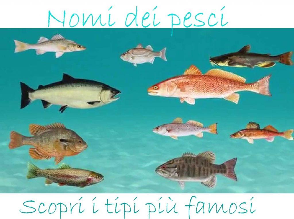 Nomi pesci tipi etimologia caratteristiche